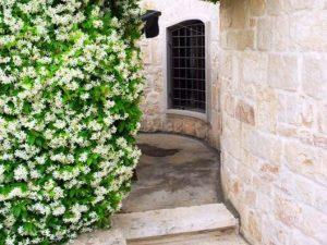 il giardino del melograno