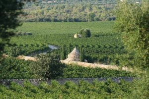 9 Vigneto giardino Masseria Amastuola