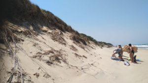 Spiaggia libera, parco delle dune costiere (5)