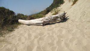 Spiaggia libera, parco delle dune costiere (7)