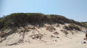 Spiaggia libera, parco delle dune costiere (8)