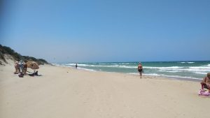 Spiaggia libera, parco delle dune costiere (9)