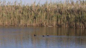 fiume morelli (2)