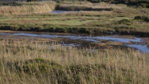 fiume morelli (8)